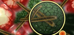 Doodbytnicze podanie antybiotyków